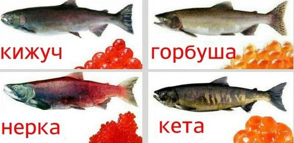 Нерка или кижуч: какая рыба лучше и жирнее, сравнение вкуса и рецепты приготовления стейков