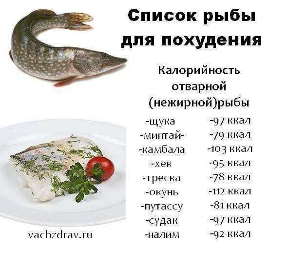 Рыба сом польза и вред - здоровое тело