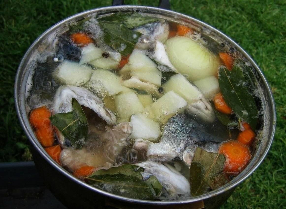Как правильно варить уху, какая рыба лучше всего подойдет, рецепты