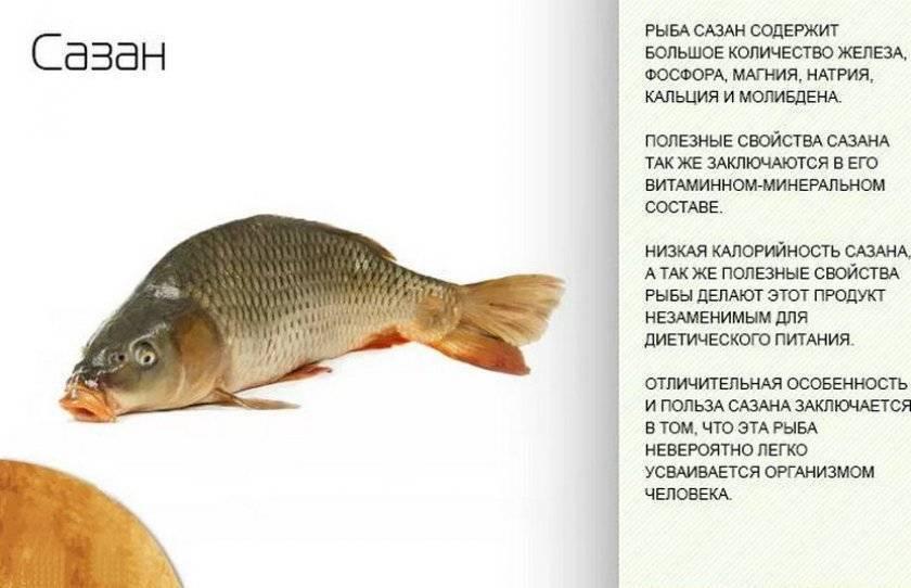 Польза рыбы кахаваи: описание и фото, вкусовые качества