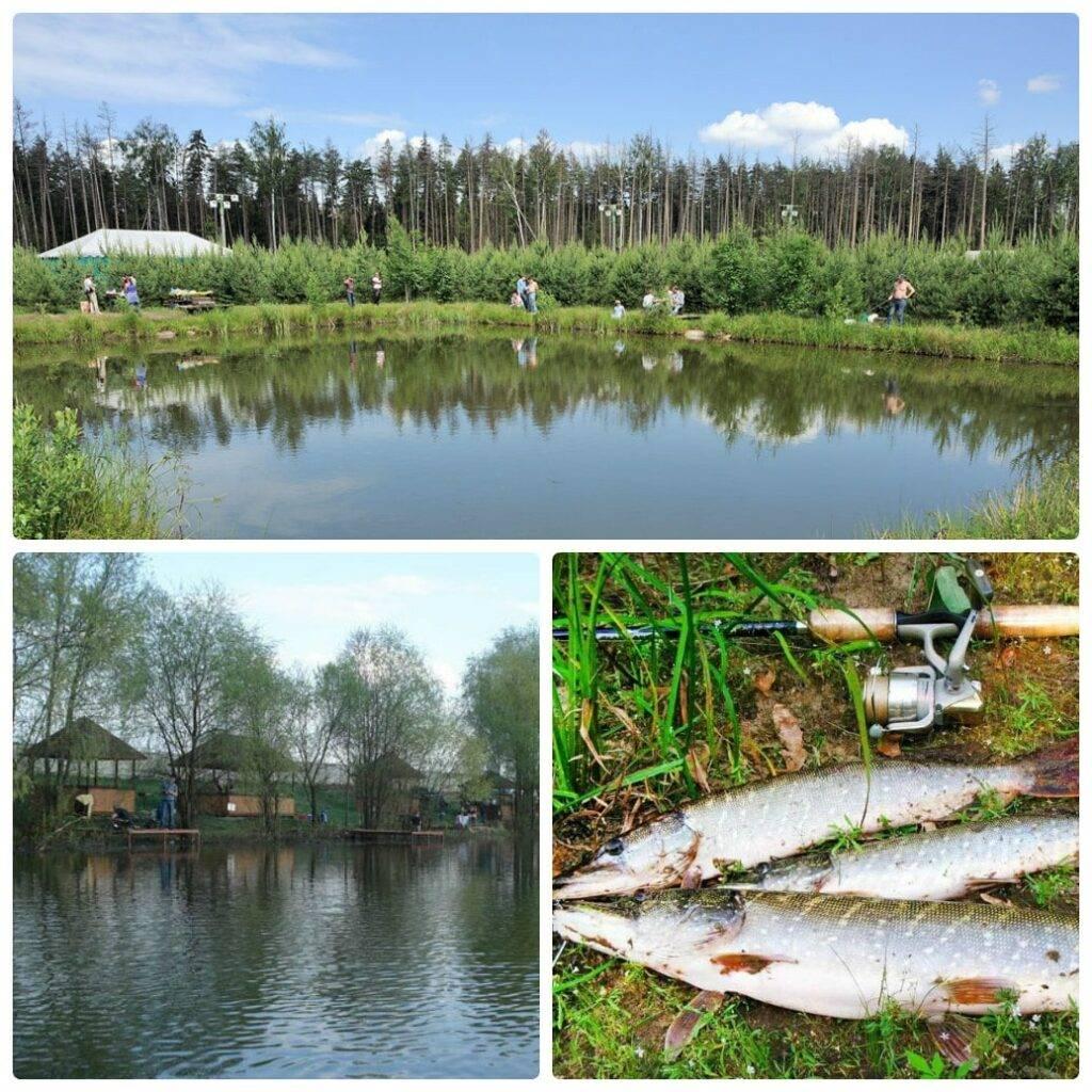 Рыбалка в бисерово платная — цены, правила ловли в vip зоне