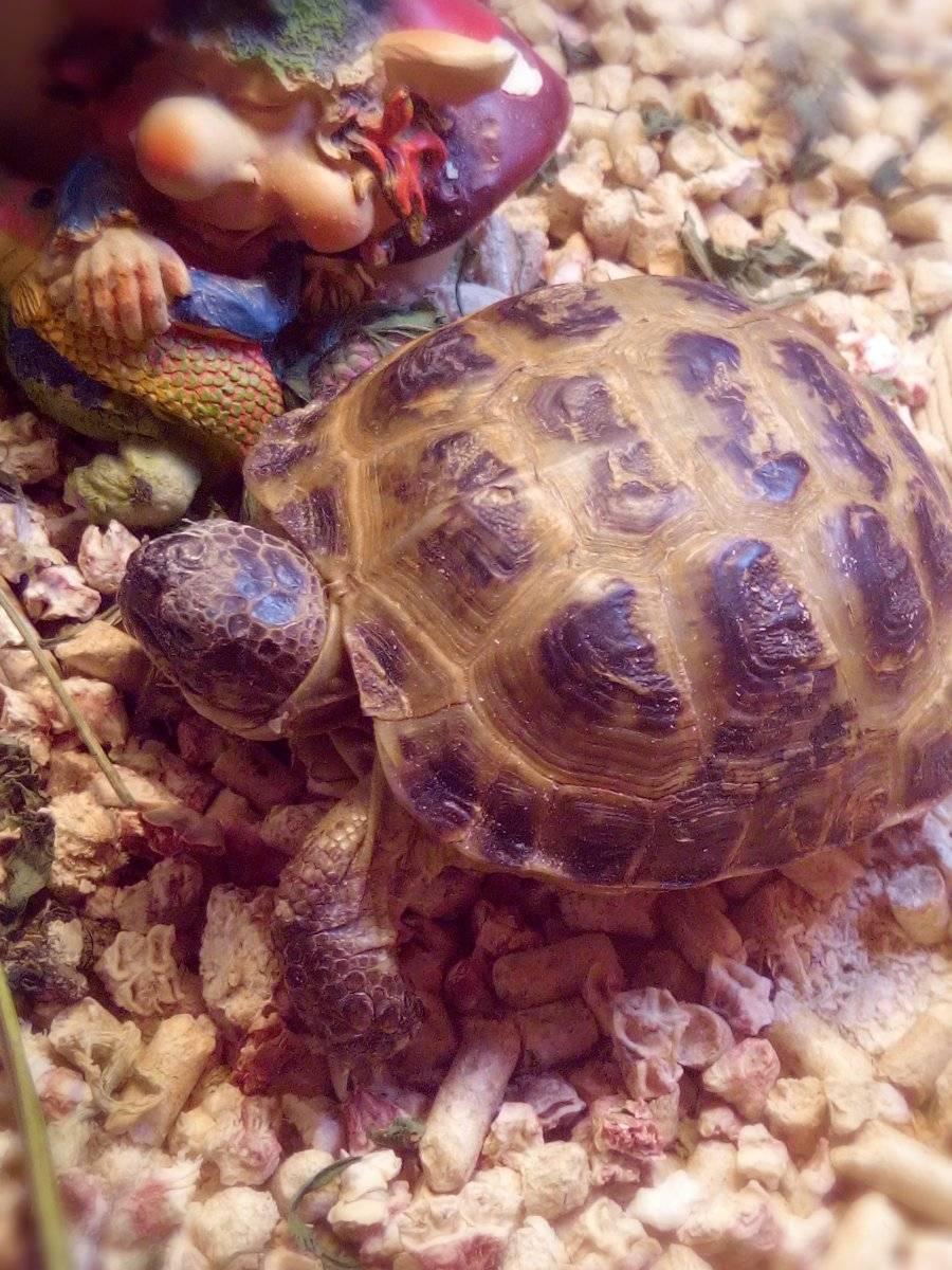 Чем кормить красноухую черепаху: корм для черепах