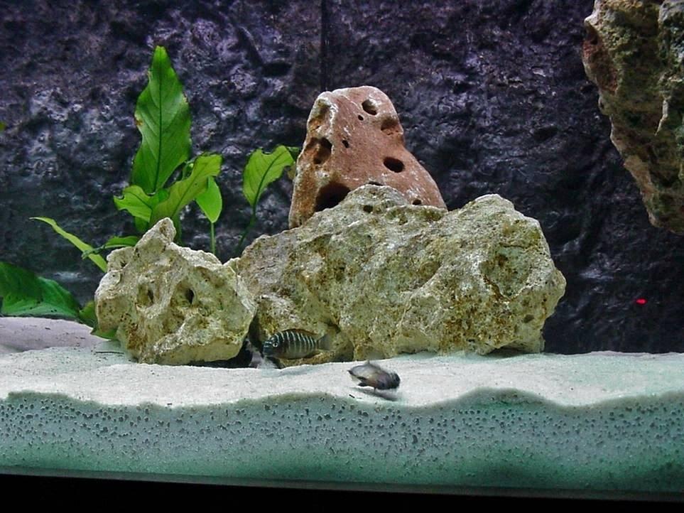 7 лучших грунтов для аквариума (топ 7) | laguna