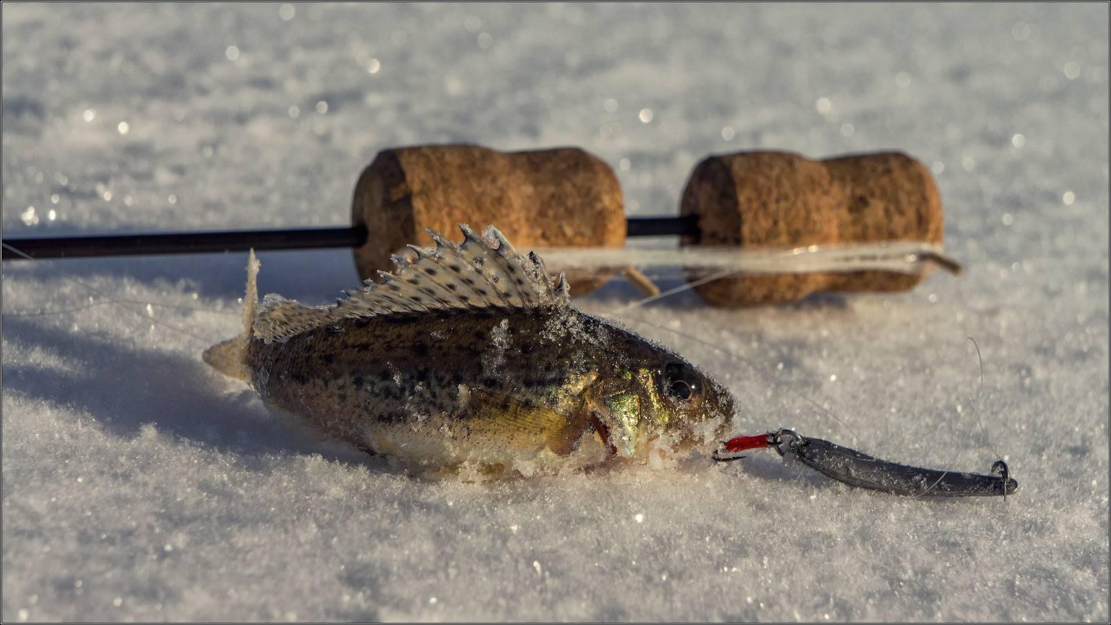Рыбалка в брестской области в 2019 году: основные места для ловли