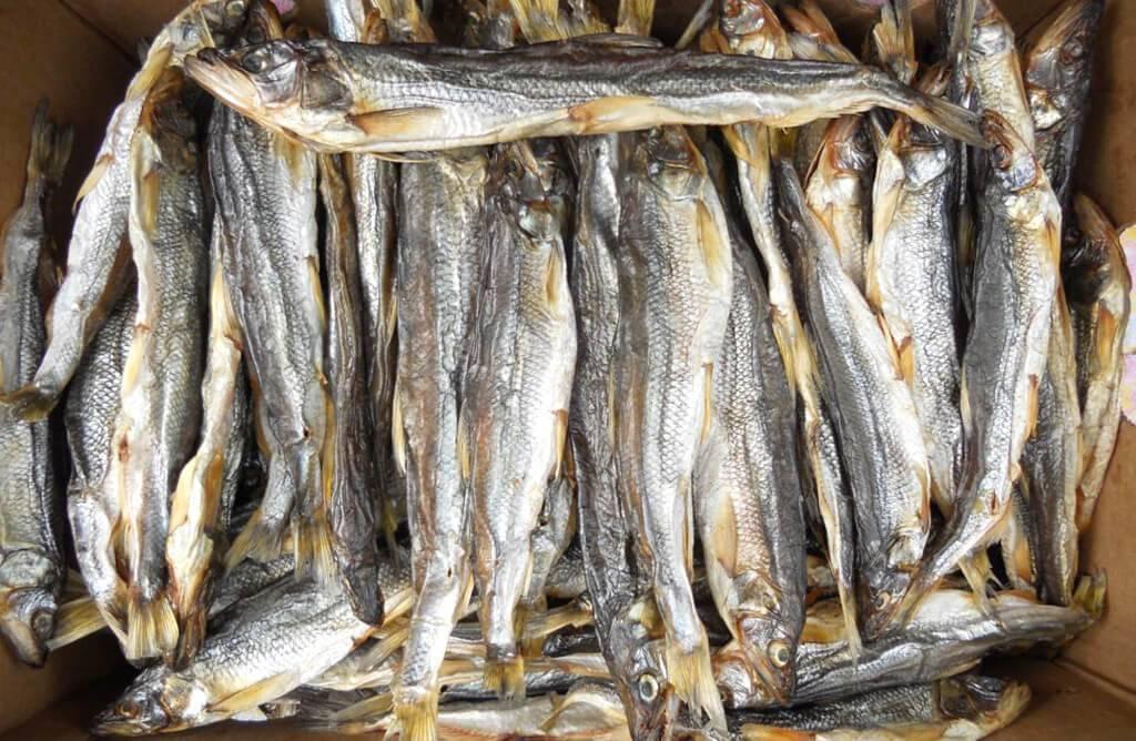 Рыба путассу: польза и вред, фото, как приготовить | zaslonovgrad.ru