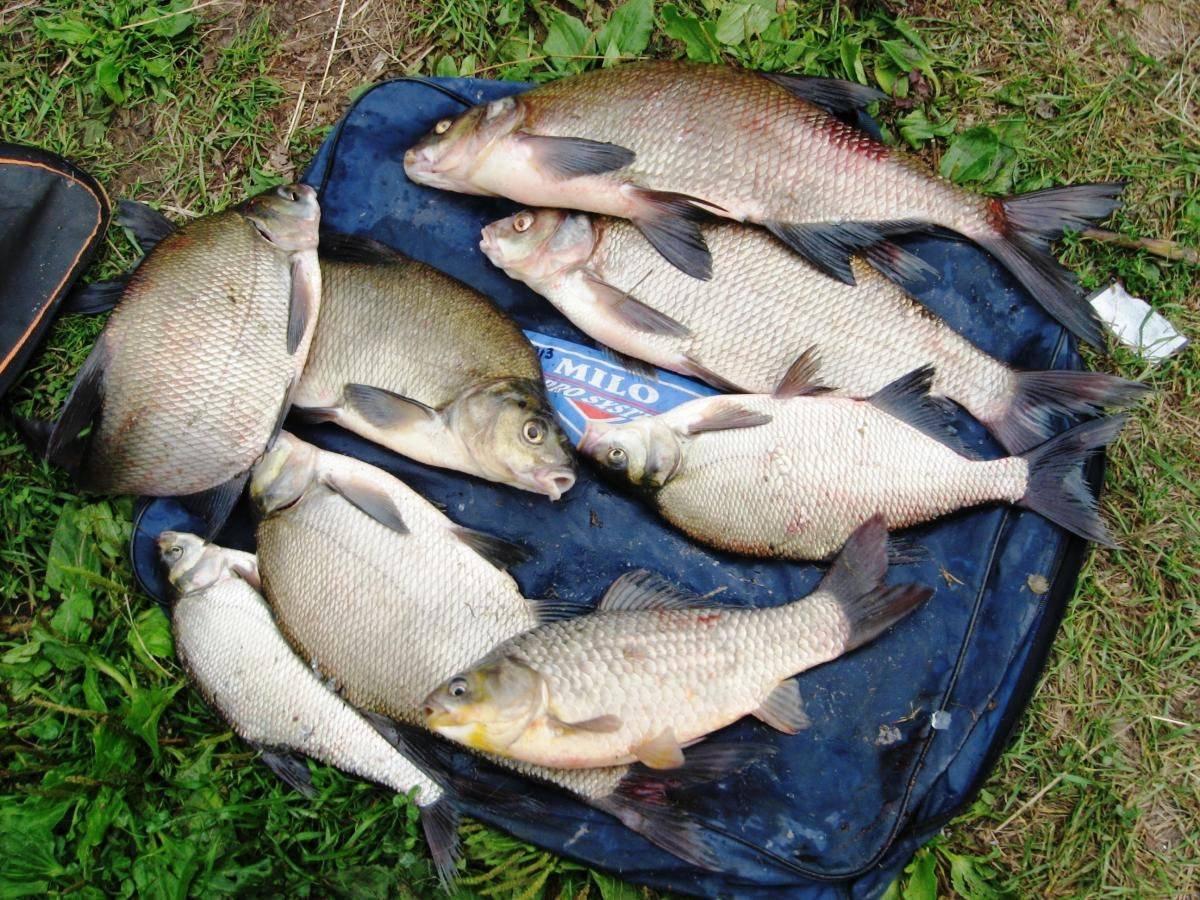 Рыбалка в витебской области в 2018-2019 году