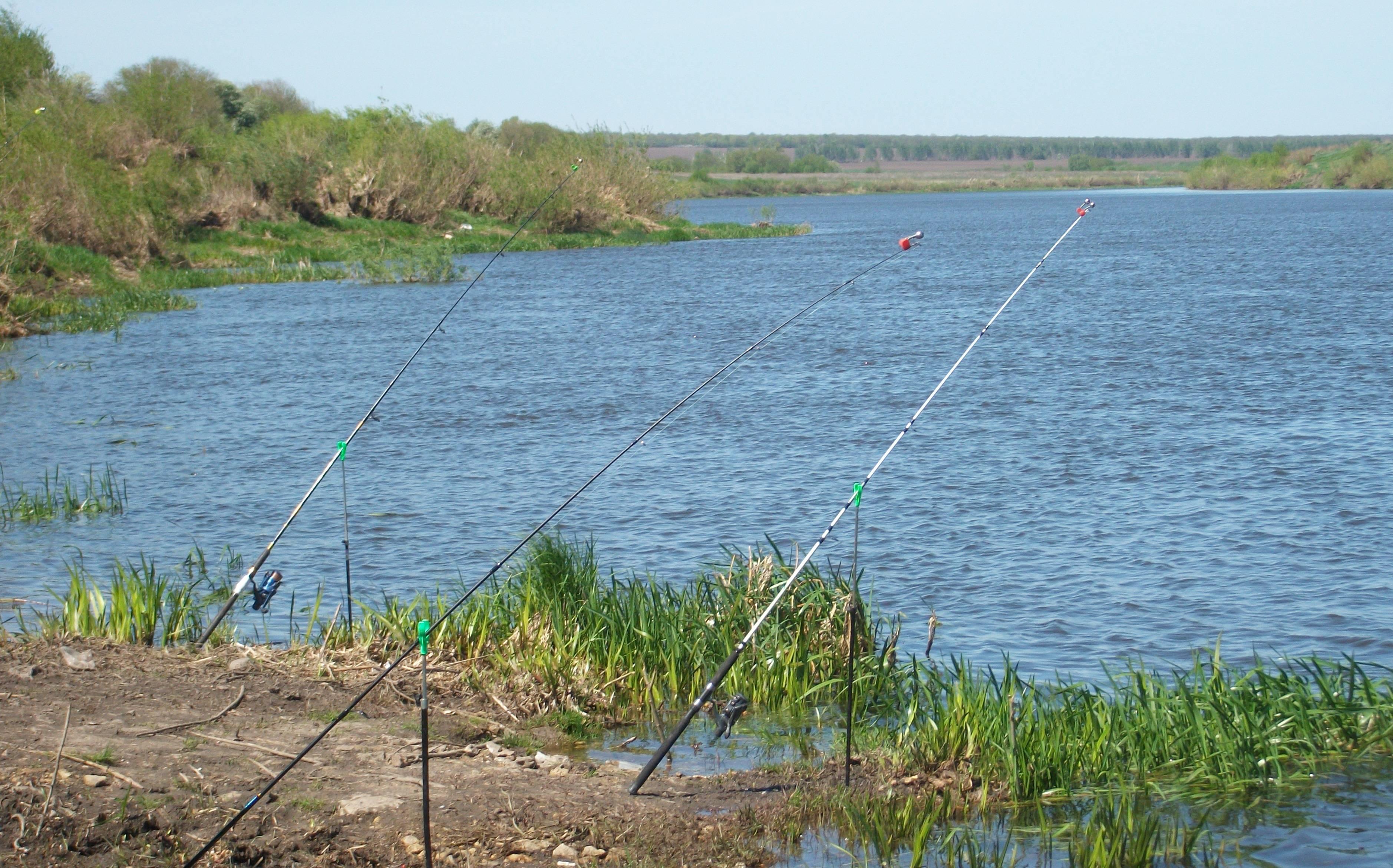 Платная рыбалка в нижегородской области: места клёва и большого улова