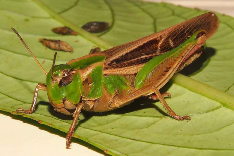 Жук-олень насекомое. описание, особенности, виды, поведение и среда обитания жука-оленя   живность.ру