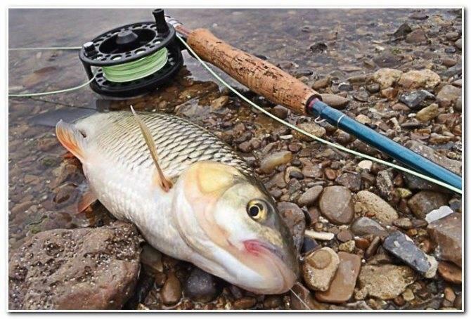 Рыба маринка и тактика ее ловли