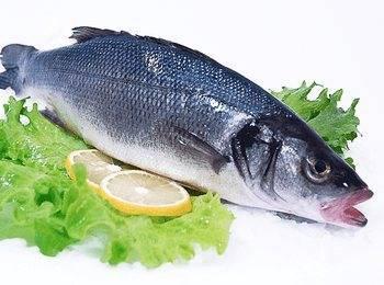 Польза и вред морской рыбы сибас