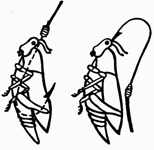 Ловля рыбы на кузнечика и как правильно насадить | щукарь | яндекс дзен
