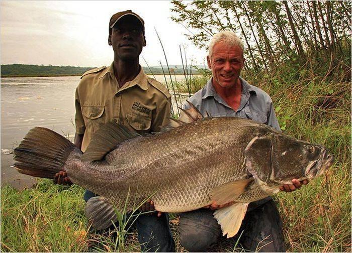 Топ 10 самых больших пресноводных рыб в мире