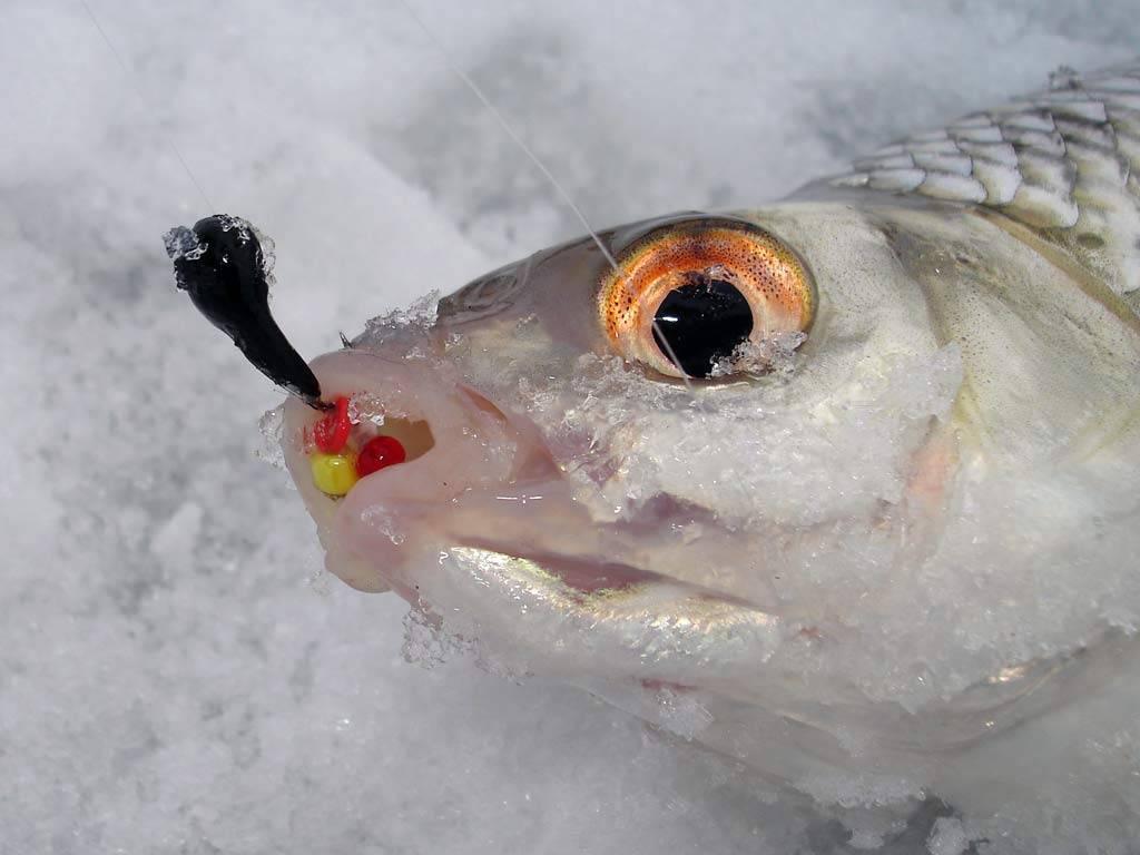 Подледный лов рыбы на Волге закончился сотрясением мозга