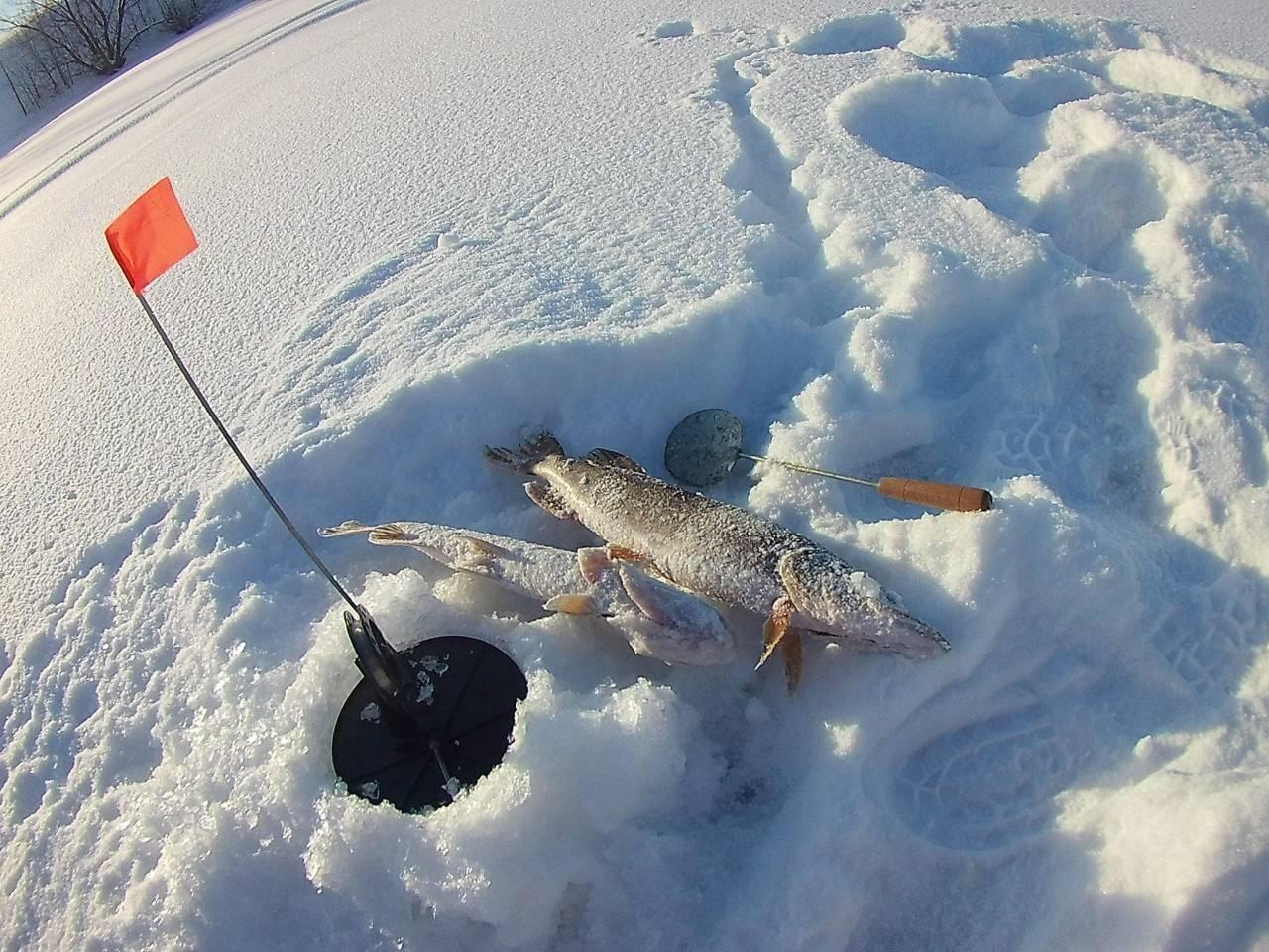 Ловля щуки на жерлицы зимой от а до я - читайте на сatcher.fish