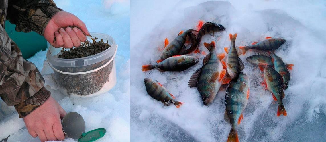 ᐉ готовим прикормку для всеядного окуня - ✅ ribalka-snasti.ru