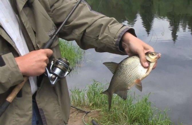 Рыбалка на фидер зимой