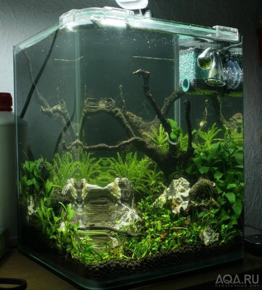 Аквариум для начинающих (аквариумистика): уход, содержание, что нужно дома, как выбрать, правила для новичка, советы