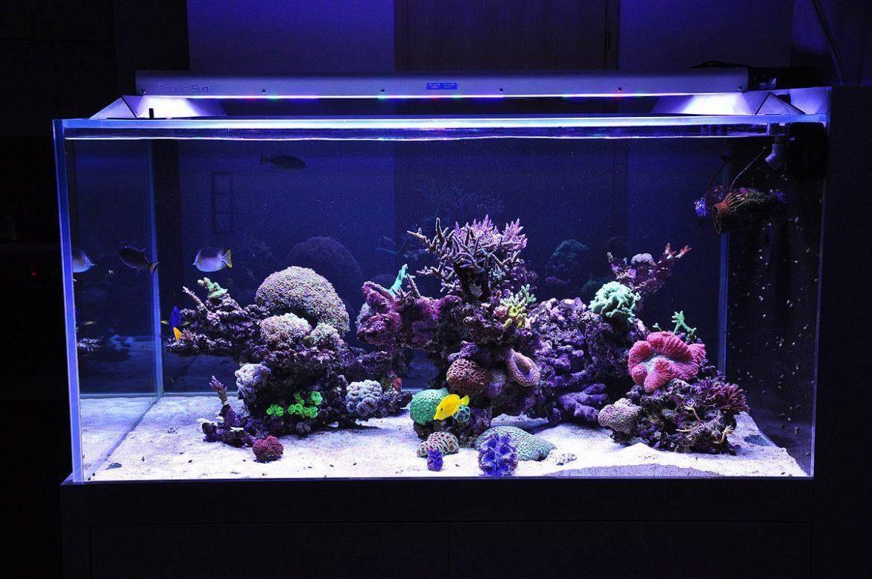 Запуск аквариума инструктаж для начинающих и продвинутых!