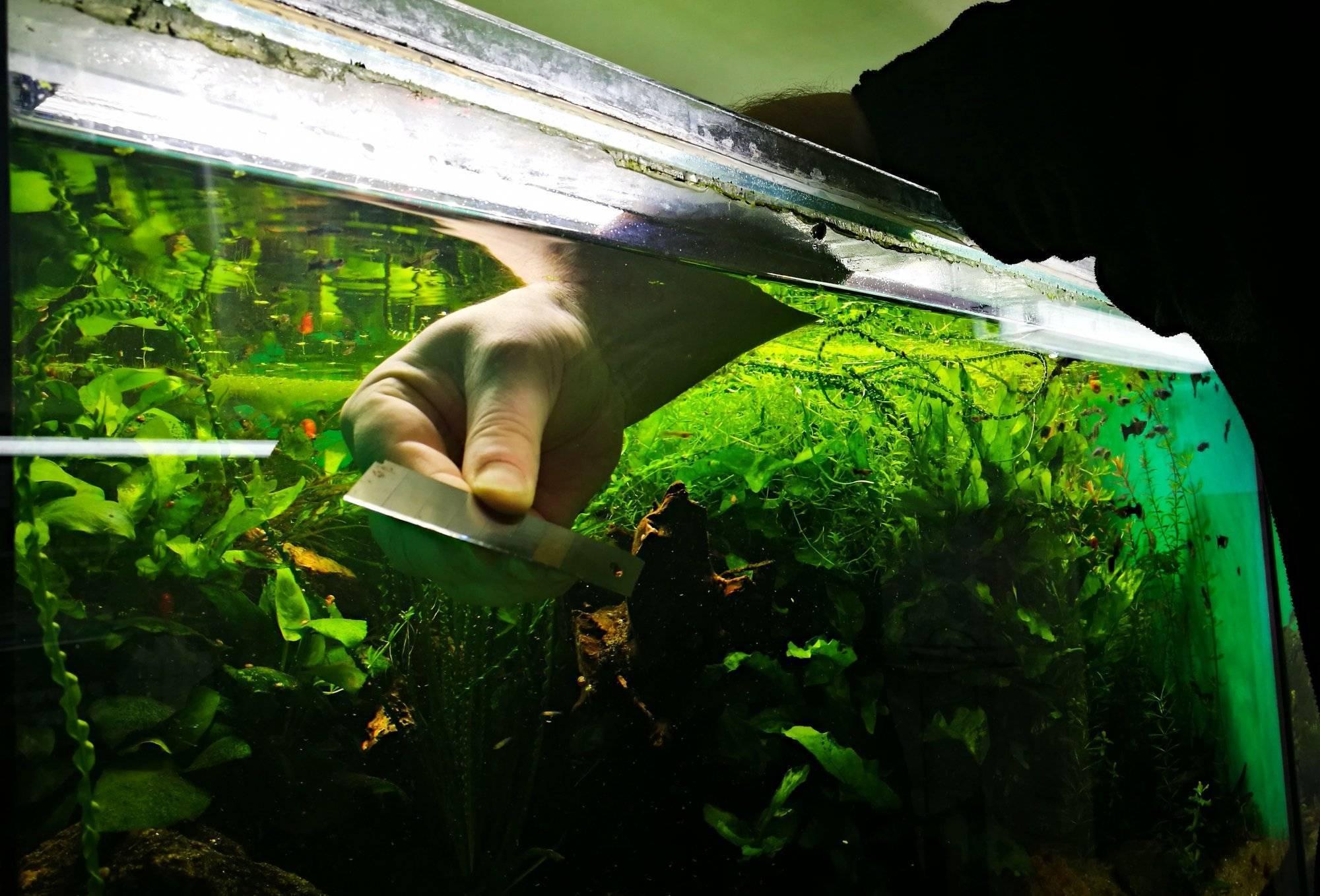 Как чистить аквариум: правильное мытье с рыбками, чем отмыть, средства для удаления в домашних условиях, зачем нужно