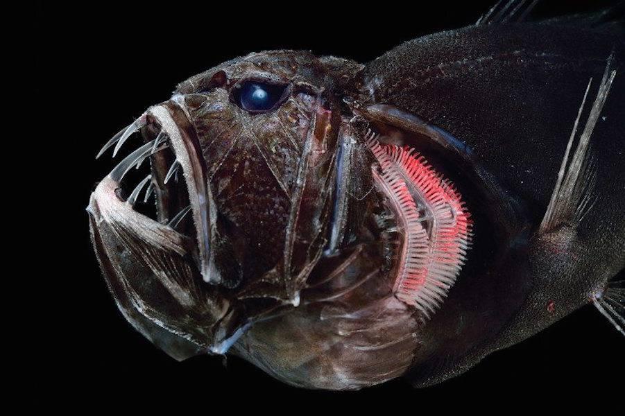 Древние морские гиганты: подборка крупнейших обитателей глубин