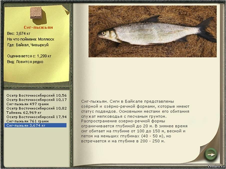 Что за рыба такая таймень и как её ловить?