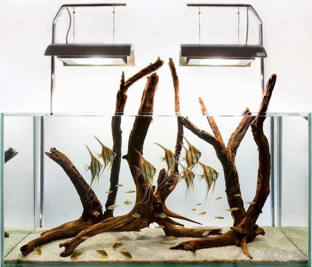 Коряга в аквариуме — ответы на вопросы, фото и видео