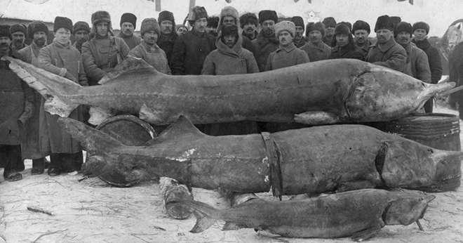 Самая дорогая красная рыба в россии и мире? цена, фото и описание