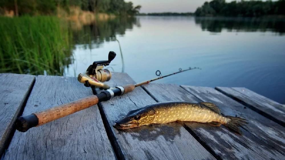 Пруды в саратовской области для платной рыбалки