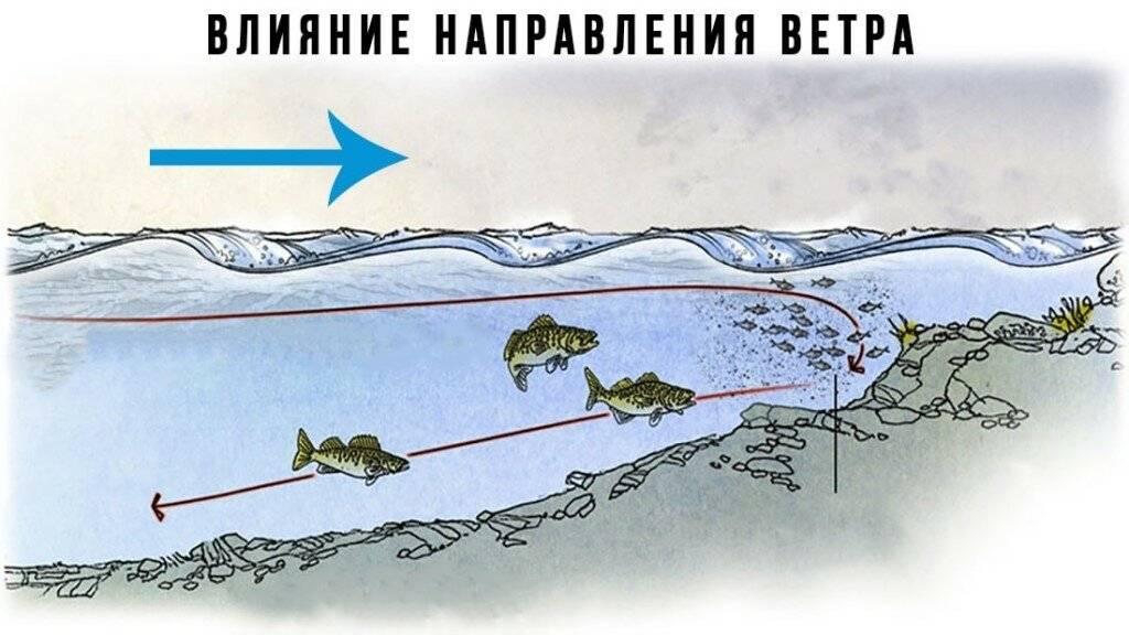 Какая рыба водится в москве-реке: виды, описание, фото