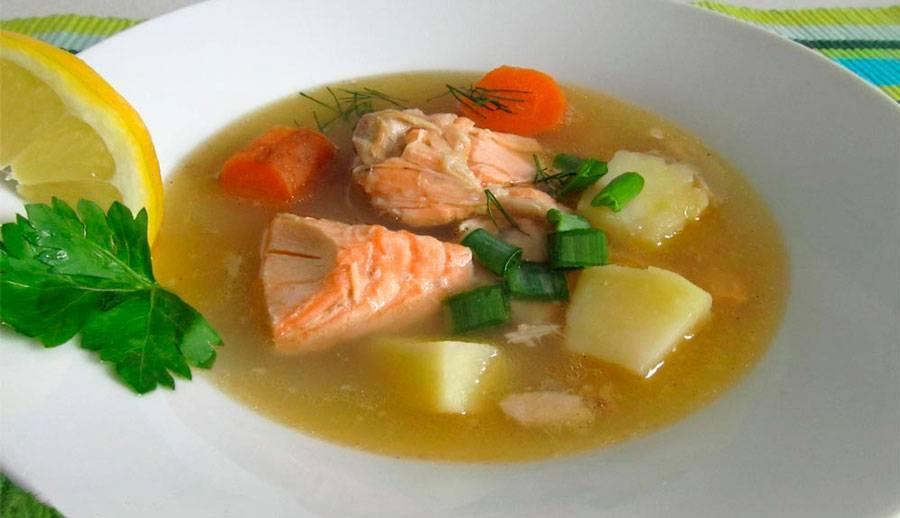 Уха из семги – вкуснейший домашний рецепт супа для всей семьи
