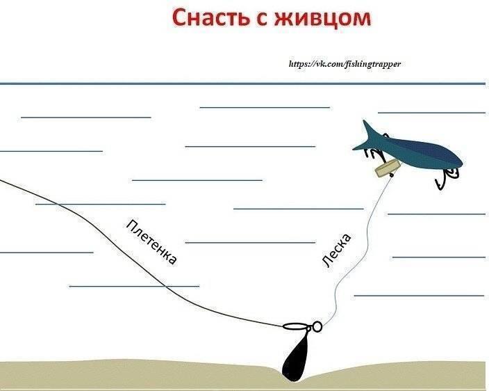 Ловля щуки летом: июнь, июль, август. где искать, как и на что ловить