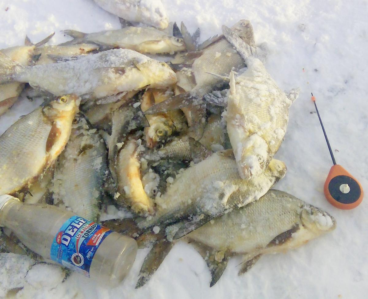 Щука осенью: ловля на спиннинг. снасти, приманки и место рыбалки на хищника. видео
