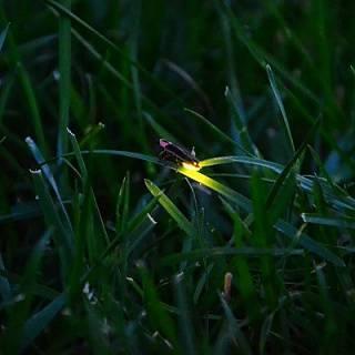 Мастер-класс: заряди светлячка — свой собственный проект подсветки