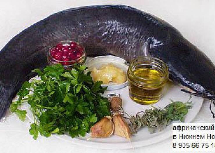 Клариус или сом клариас аквариумный