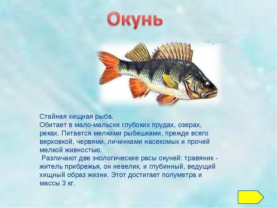 Морской карась: описание черноморского ласкиря и особенности ловли