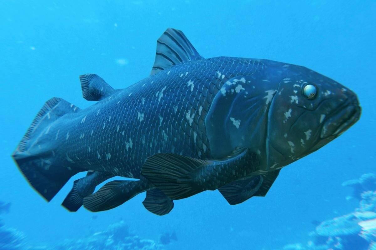 Кистепёрая рыба латимерия | рыбы | багира гуру