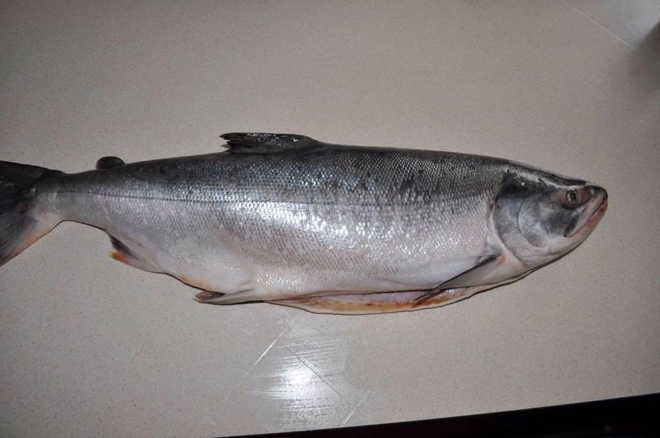 Полезные свойства горбуши — показания и противопоказания к применению мяса рыбы (115 фото + видео)