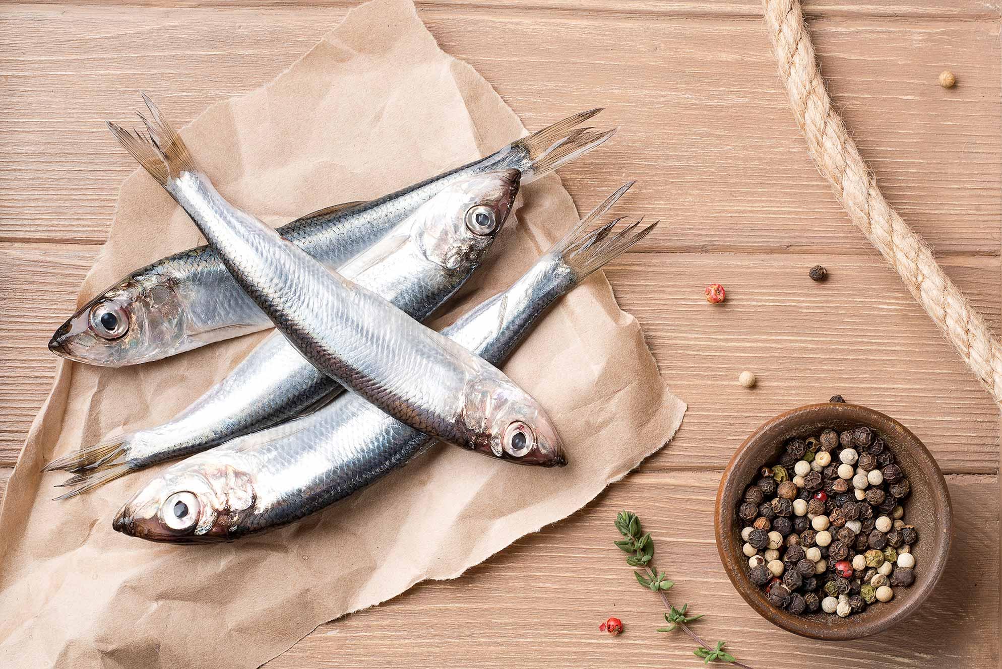 Рыба мойва: описание с фото, применение, калорийность и хранение