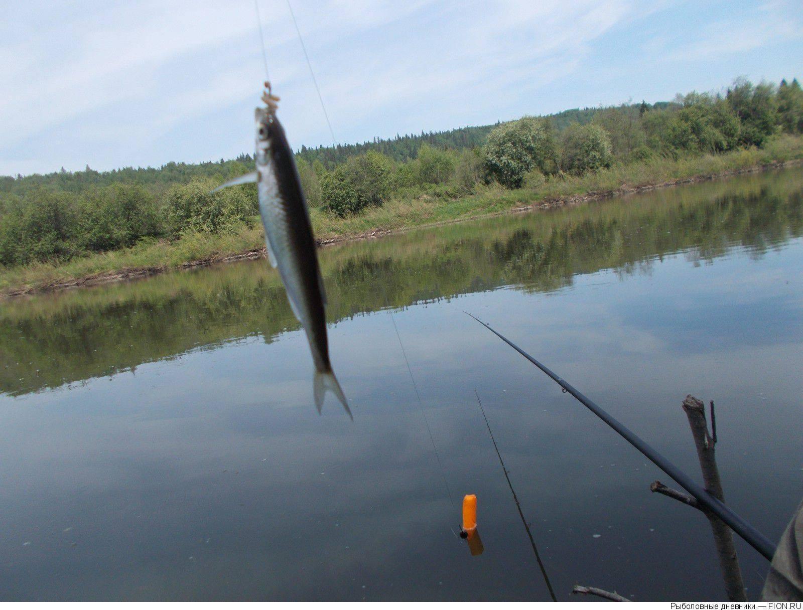 Рыбалка в свердловской области в разделе справочник на сайте поискпути