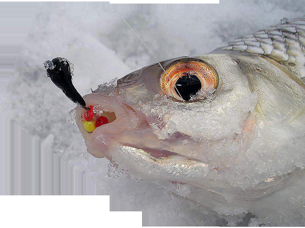 Зимняя рыбалка на безмотылку, выбор мормышки, техника ловли