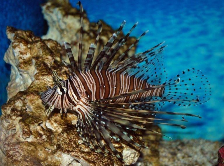 Рыбы красного моря - названия видов, фото и описание — природа мира