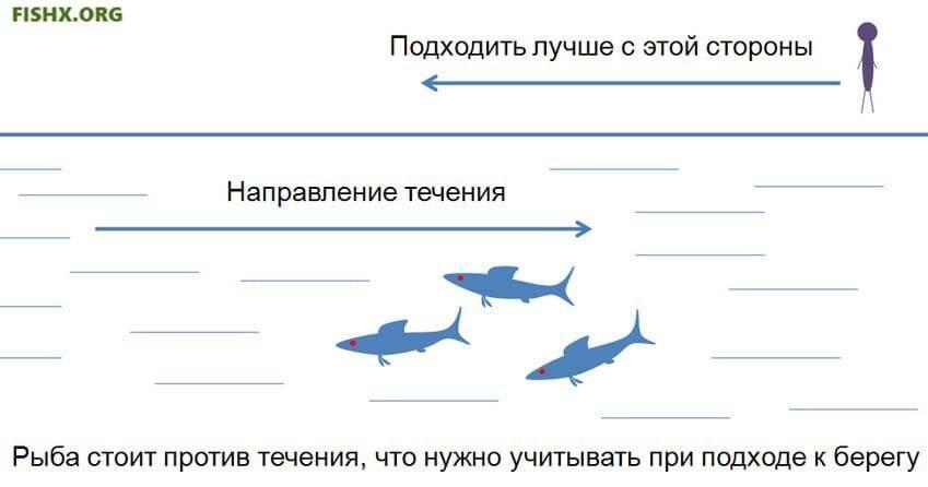 Видит ли рыба рыболова? мир, который расположен над водой.