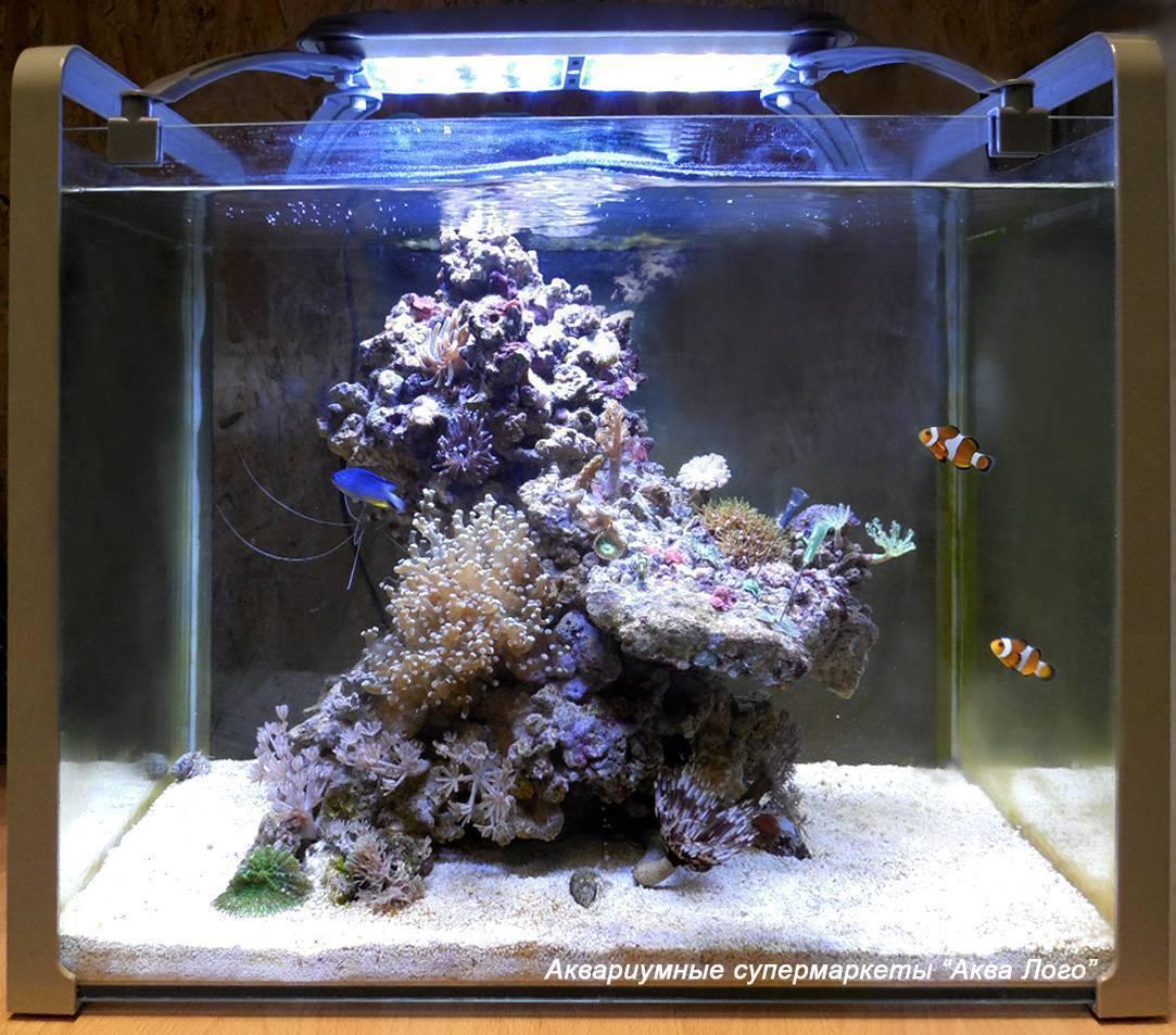 Пошаговый алгоритм запуска аквариума, советы по уходу