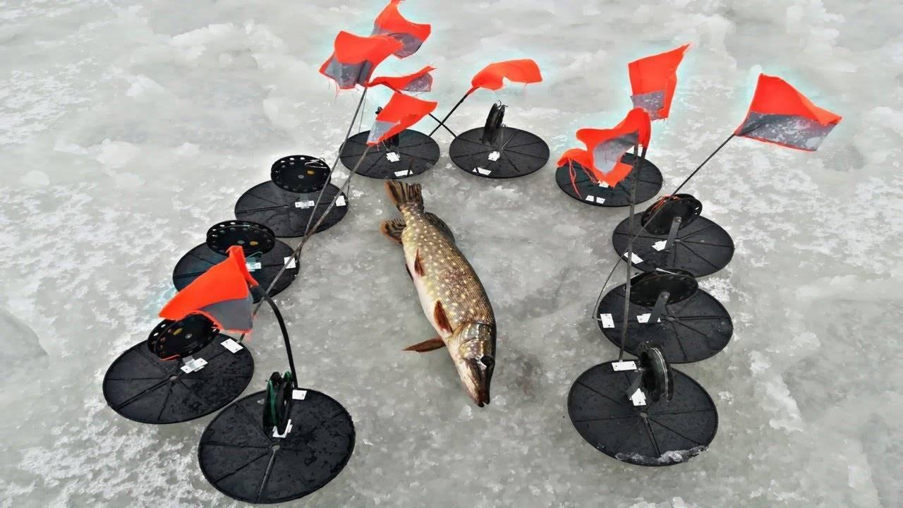 Ловля щуки на жерлицы: тонкости и секреты сезонной рыбалки