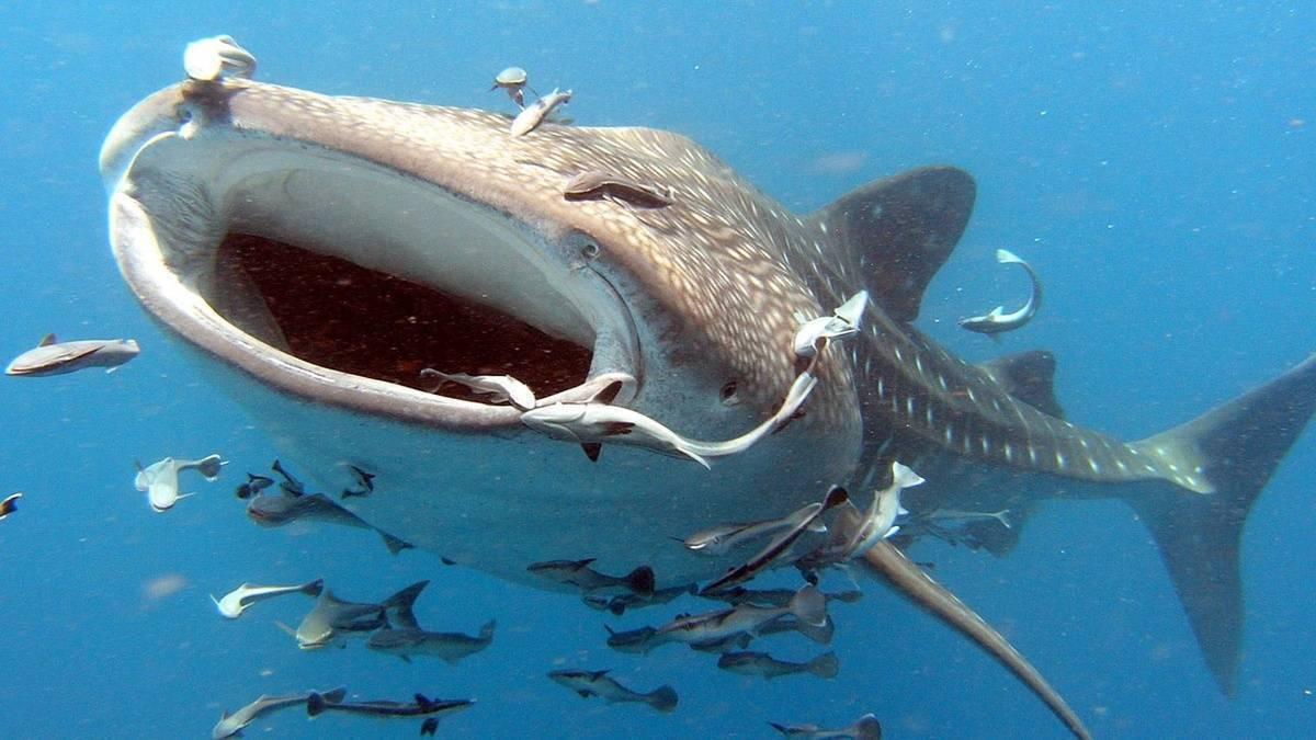 Топ-10 самых крупных пресноводных рыб мира