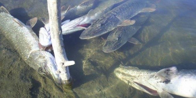 Рыбное хозяйство - департамент природных ресурсов и охраны окружающей