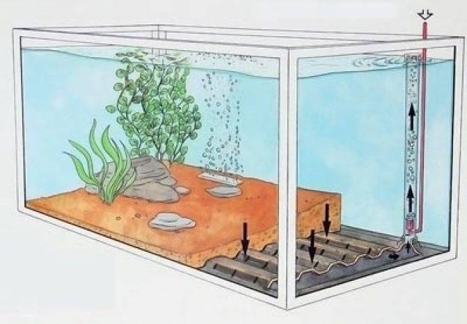 Сифон для аквариума своими руками (24 фото): как сделать «подводный пылесос» для чистки аквариума? самодельная конструкция из капельницы