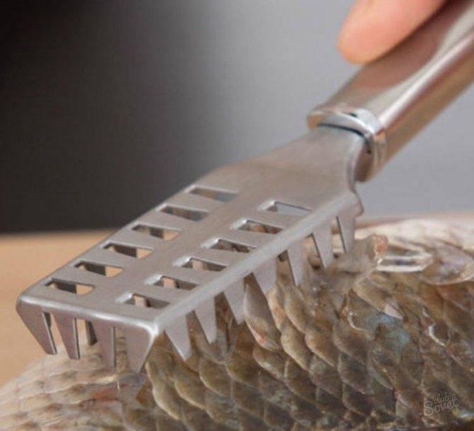 Как чистить линя в домашних условиях от чешуи, нужно ли это делать перед приготовлением
