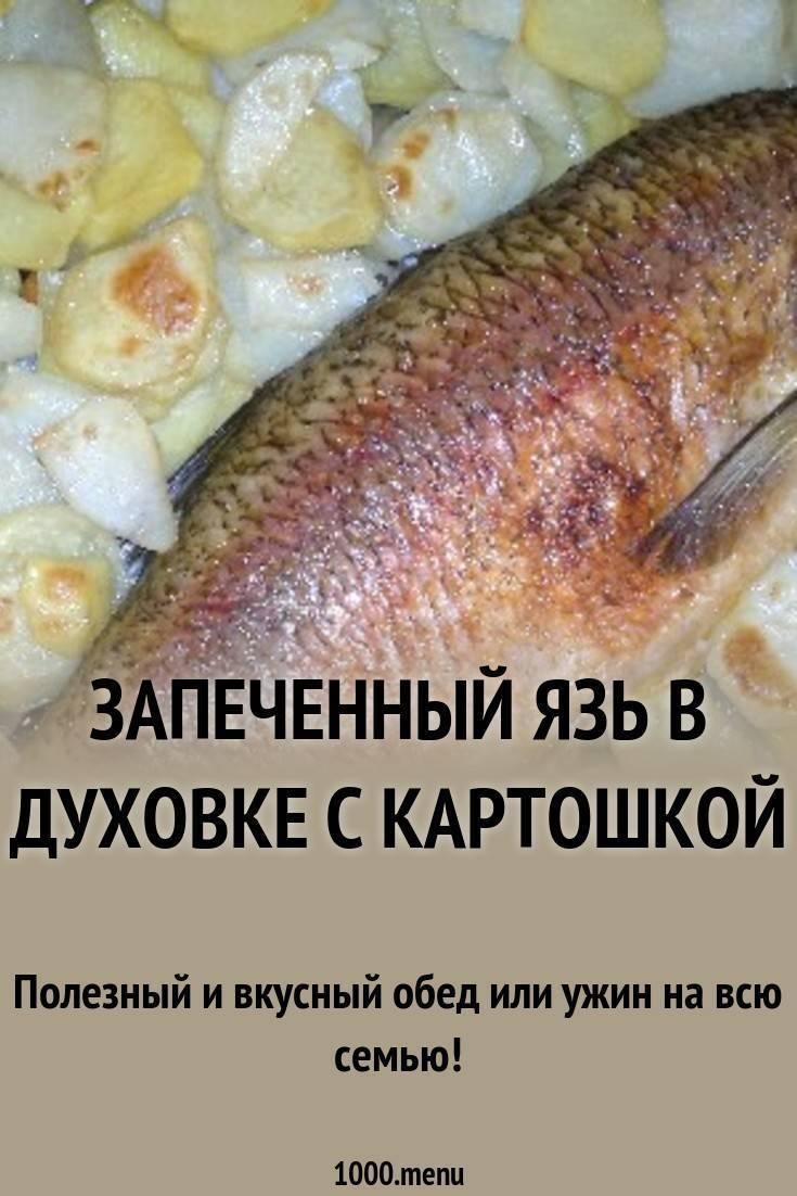 3 вкусных рецепта приготовления язя
