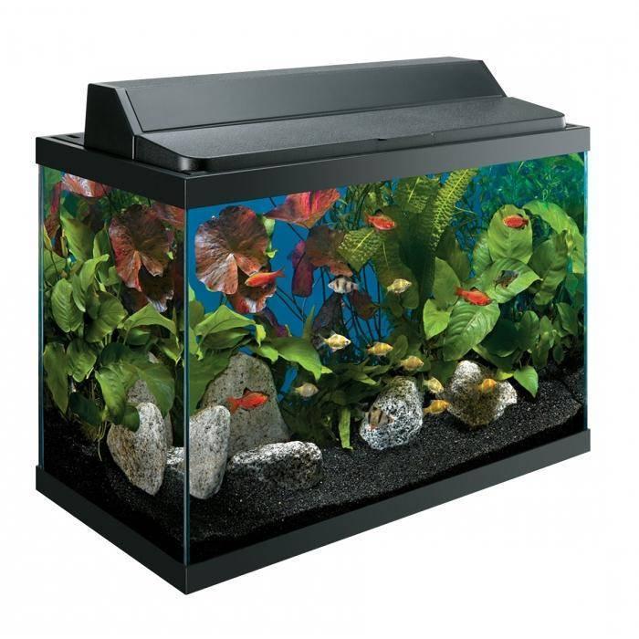 Как выбрать аквариум или какой аквариум лучше